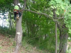 Corrina climbing trees on Peddocks Island