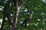 Stephen climbing a tree on Peddocks Island