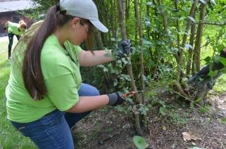 Ashley target pruning