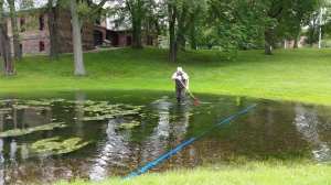 Bob raking the algae out of the pond.