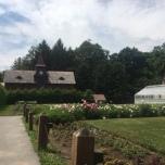 Rose garden at FDR.