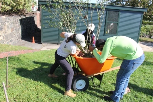 Adrienne, Ardo, and Jeremiah getting the tree ready to be planted